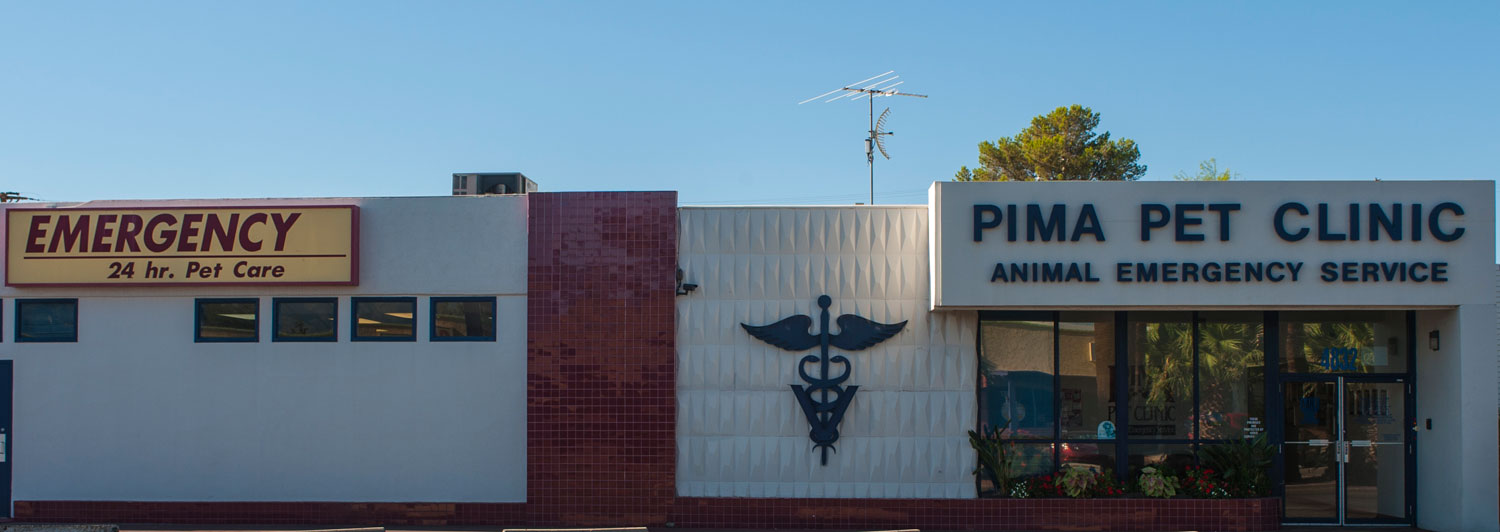 Veterinary and Emergency Pet Care in AZ   Pima Pet Clinic of